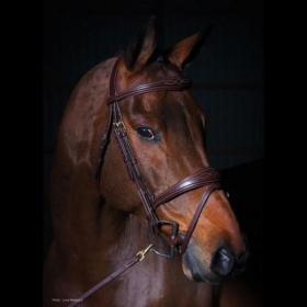 Dyon valjad anatomic flash noseband