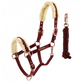 Kentucky halter with lamb