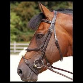 Dyon bridles Classic with figure 8 noseband
