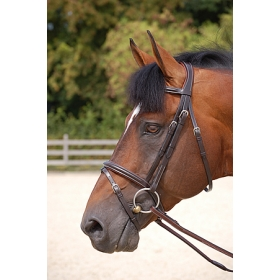 Dyon bridles Classic with flash noseband